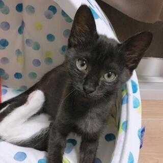【トライアル中につき一時停止】動物病院前に捨てられた子猫の里親募...