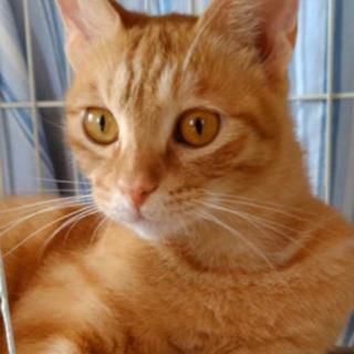 美猫❤️生後7ヶ月