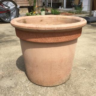大きな鉢。オリーブの木などに良く合います。1500円