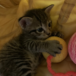 生後1ヶ月 子猫