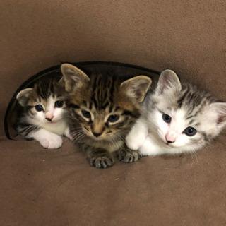 母猫と子猫3匹の里親さん募集