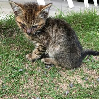 先日掲載した猫ちゃんの兄弟のようです。