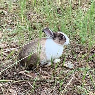 里親さんが見つかりました。子ウサギの里親募集