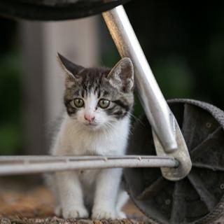 迷い子猫です。飼ってくれる方を探してます。