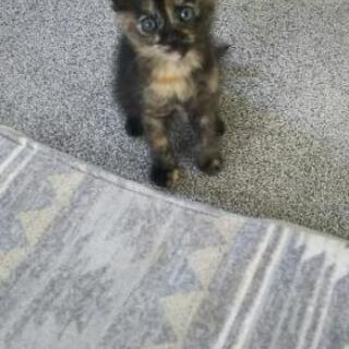 【急募】保護子猫です。里親さん探してます!