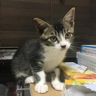生後2ヶ月程の子猫♂6.24更新