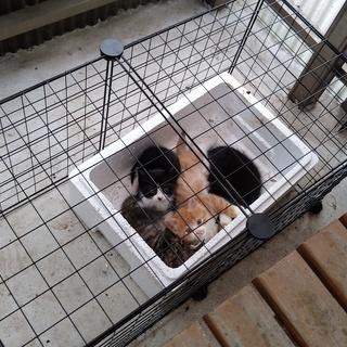 生後1か月以内4匹子猫を保護しました。