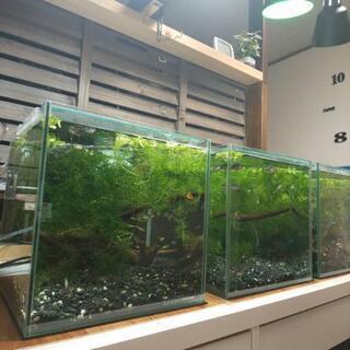 熱帯魚水槽一式  生体もセットで(生体だけでもOK)