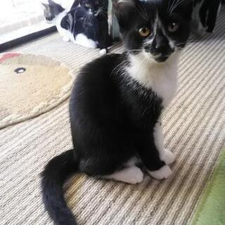 生後4ヶ月の子猫の里親募集しています