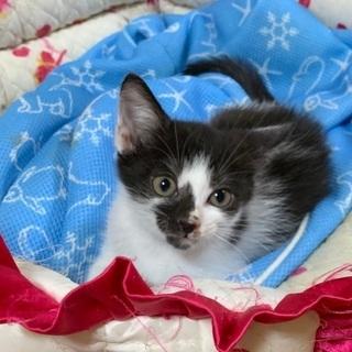 シロクロお目々パッチリの子猫です♪♪