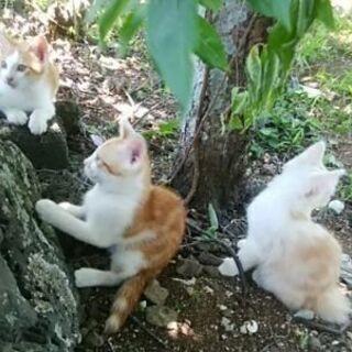 6週から8週ぐらいの仔猫たち