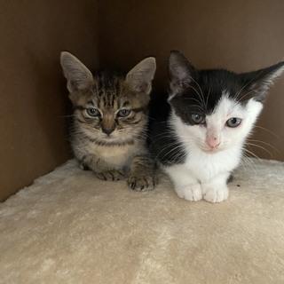 里親決定 子猫ちゃん2匹