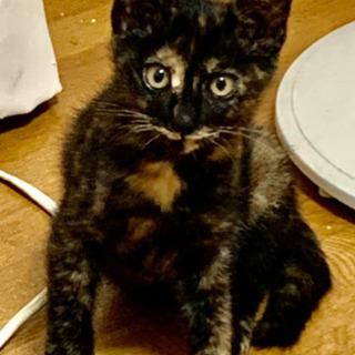 里親さん決まりました!3カ月くらいのサビ猫ちゃん