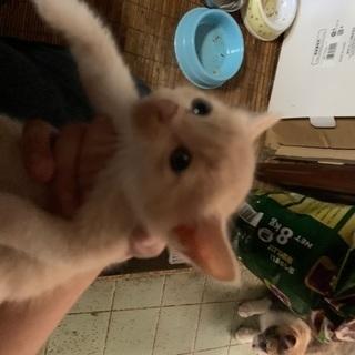野良猫の仔猫→肌色 1ヶ月程度