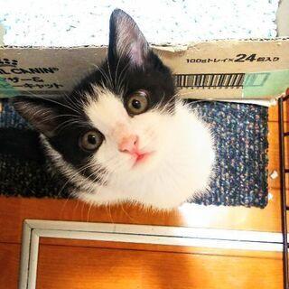 人間大好き♪姉妹子猫