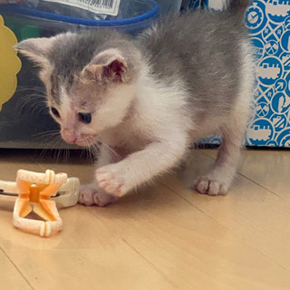 保護猫2匹です!写真追加していきます(^^)