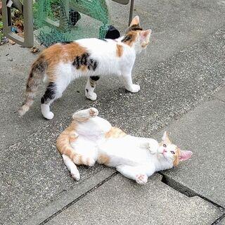 楽しい半ノラ子猫