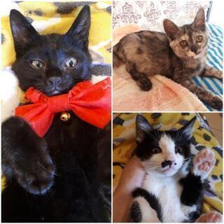 黒・白黒・サビの3兄妹🐱生後3ヶ月