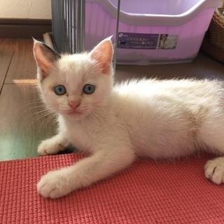 生後2ヵ月程子猫♂6.24掲載
