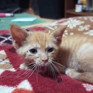 生後3か月くらいのオスの子猫です。里親募集
