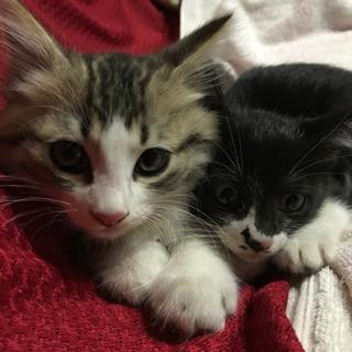 子猫2匹里親さん募集