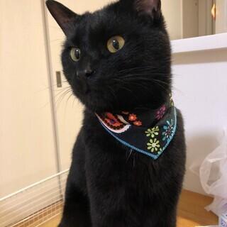 黒猫オス1~3歳の家族募集!