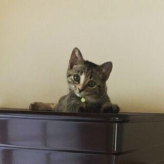 美人な子猫です Instagramのhina20200305みて...