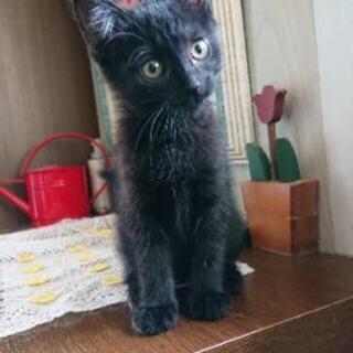 黒猫女の子