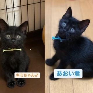 甘ったれ兄弟(7/28ミニ譲渡会)