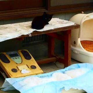 子猫 まっ黒