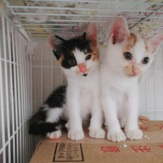 子猫たちの里親募集です。