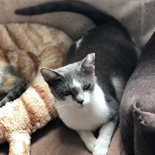 保護猫メス1歳