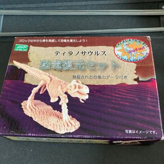 ティラノサウルス復元セット◆
