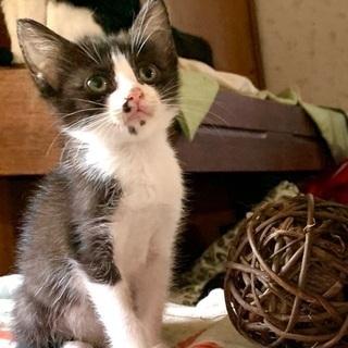可愛い子猫です♪♪