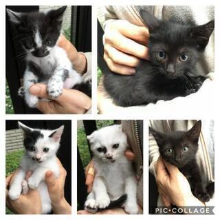 白黒子猫の兄妹