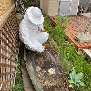 蜂の巣駆除を行っております!!