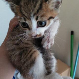 ❣️可愛いメス猫ちゃん❣️