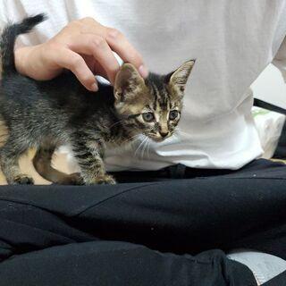 里親募集!愛媛県松山市にて子猫保護してます!