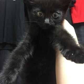 1.2ヶ月の真っ黒くん♂