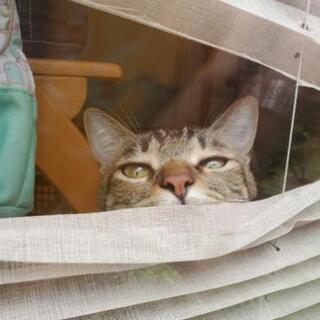 猫用品、不要な方!!!!