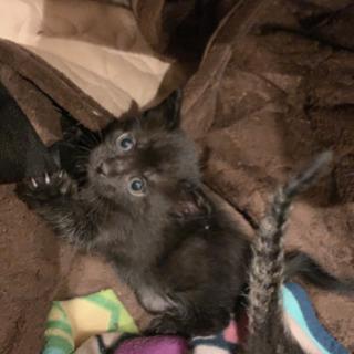 5/12産まれた子猫です