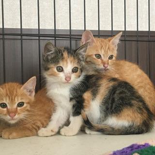 子猫3匹 生後2ヶ月