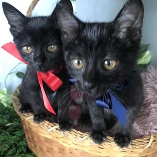 クールな黒猫くん🐈