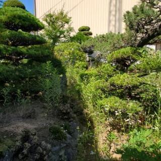 庭木の剪定、草刈り除草等承ります