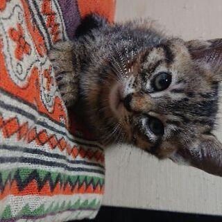生後2ヶ月の四ひきの子猫達です