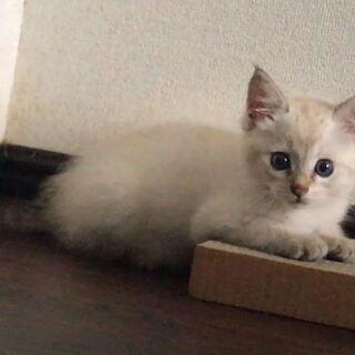 綺麗な子猫です