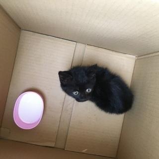黒猫子猫ちゃん