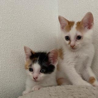 仔猫2か月くらいの雄雌兄妹