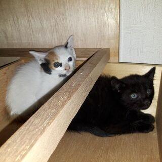 野良の母猫の子達(届出済み、確認しました)三毛とキジトラの子は、...