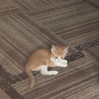 生まれたばかりの仔猫ちゃん 茶トラ